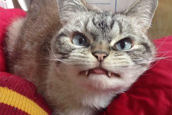 Самые злые коты в Мире!