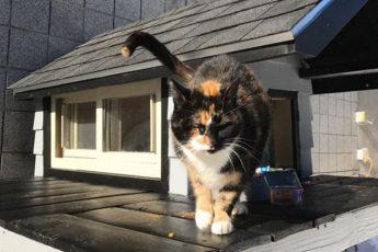 Кот SWAT в новом доме