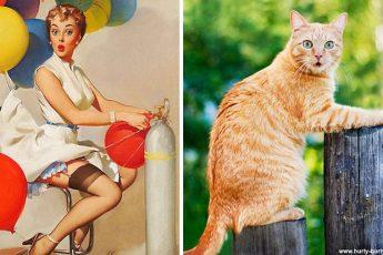 Кошка и фотомодель удивлены