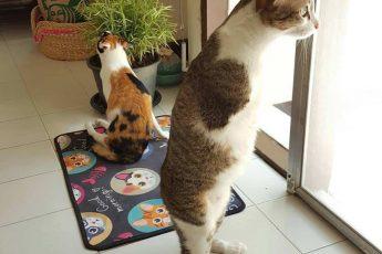 Способный смотрит в окно, а Фан Фан сидит рядом
