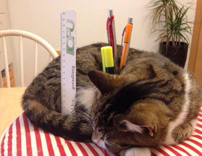 кот держит ручки
