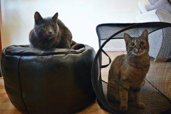 серый кот сидит на пуфе, а рыжий - в корзине