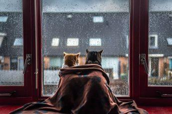 Кошки во время дождя
