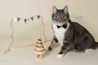 кошачий торт