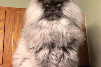 недовольная кошка