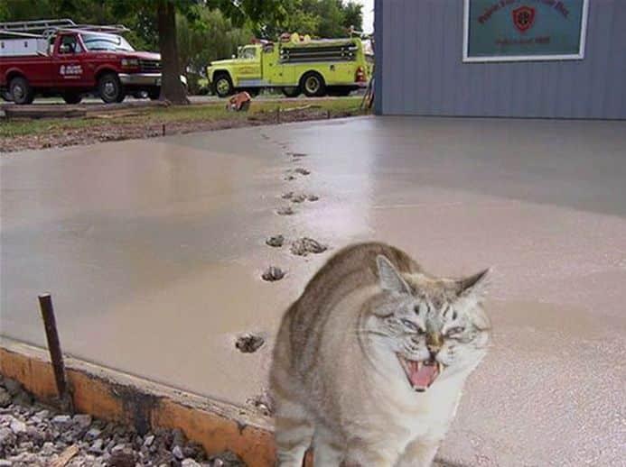 кот злорадствует