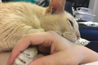 хозяйка держит кота за лапу