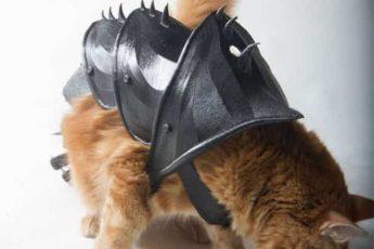 кот в броне
