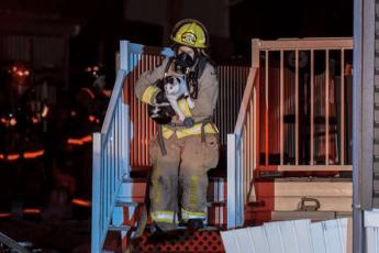 пожарник выносит кошку