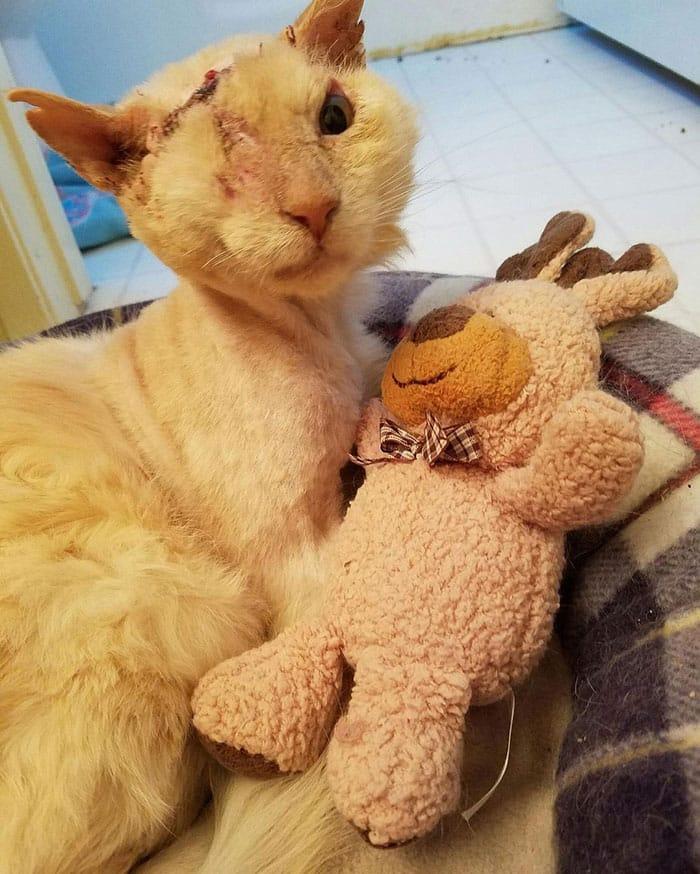 раненый кот возле плюшевого медведя
