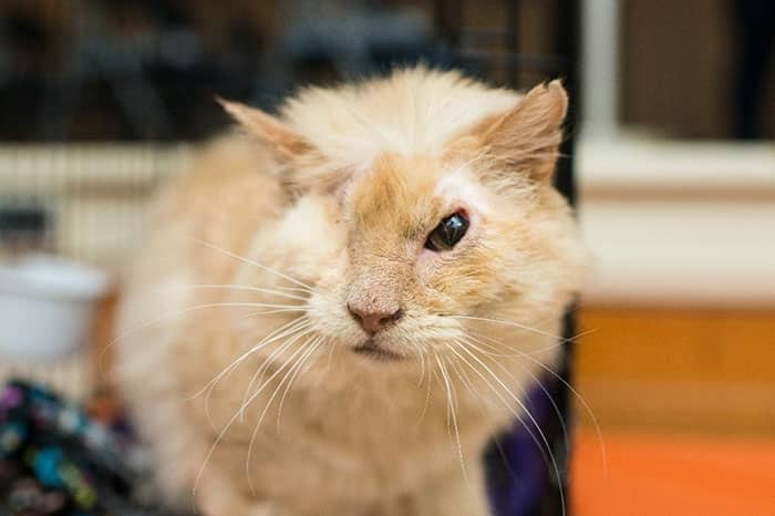 раненый кот с одним глазом