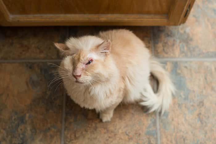 раненый кот сидит полу