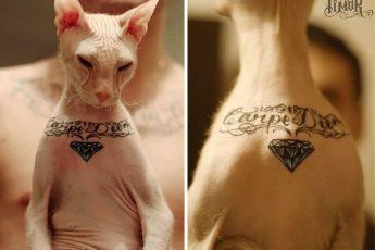 Кошка с татуировкой