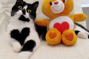 кошка возле игрушки