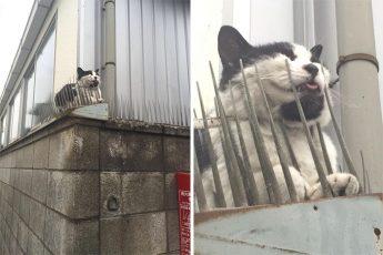 кошки эволюционируют