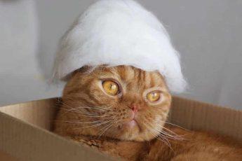 кот в белой шляпе