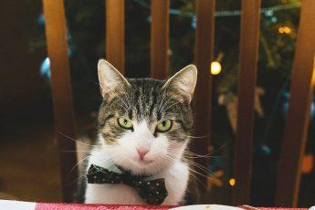 кошачья версия рождества