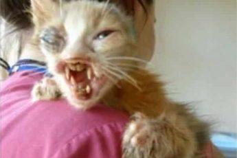 изродованый котёнок на плече