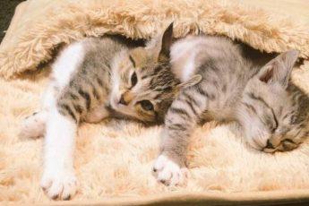 котики под ковром