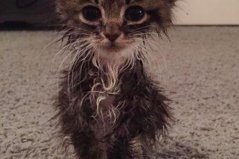 котенок только попал в приют