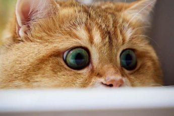 """""""кот в сапогах"""""""
