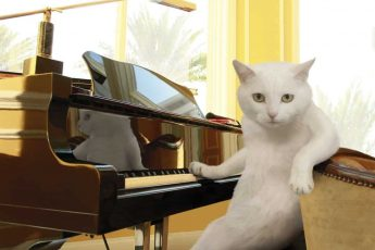 Кошка и пианино