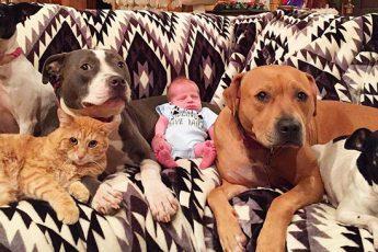Младенец собаки и кот