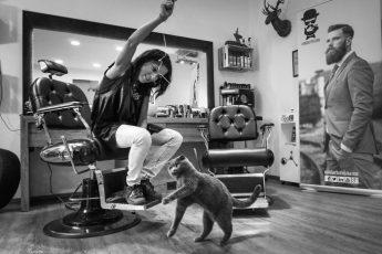 Кошки в парикмахерской.