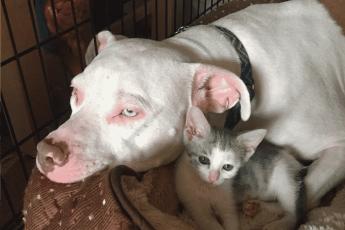 котенок и собакой