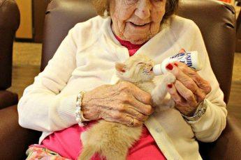 кот работает в доме престарелых