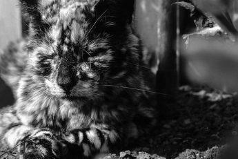 очень красивый мраморный кот