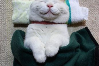 кот спит на подушке и под одеялом