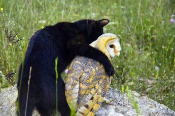 Кот с совой