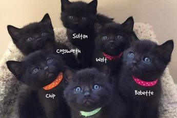 Шестеро котят