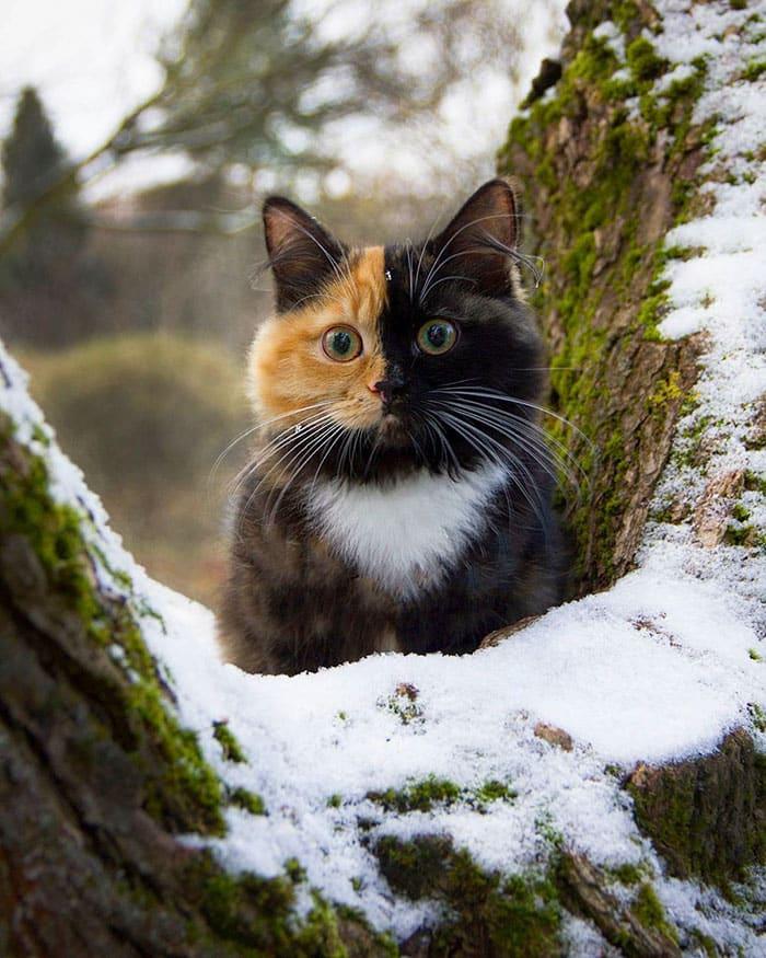 Яна сидит на дереве