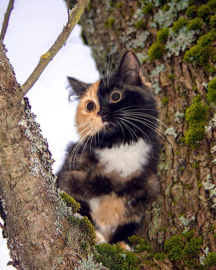 Яна сидит в развилке ветвей