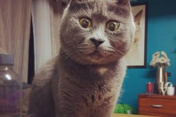 удевленный кот