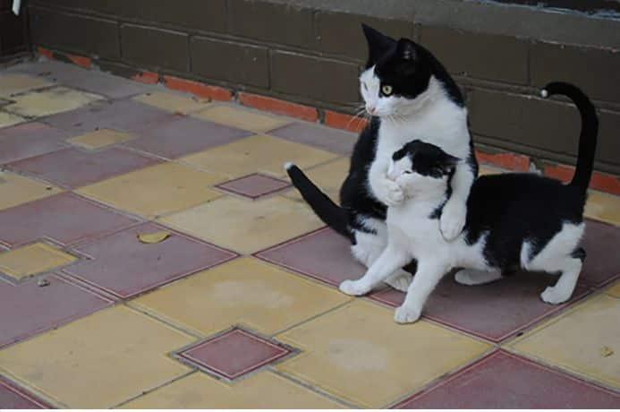 кот обнимает другого кота