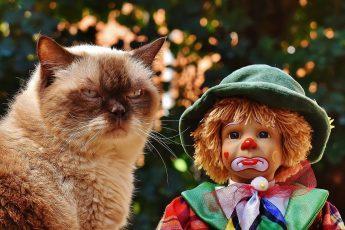 Кем был кот в прошлой жизни?
