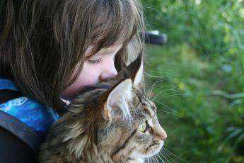 кот на руках у девочки
