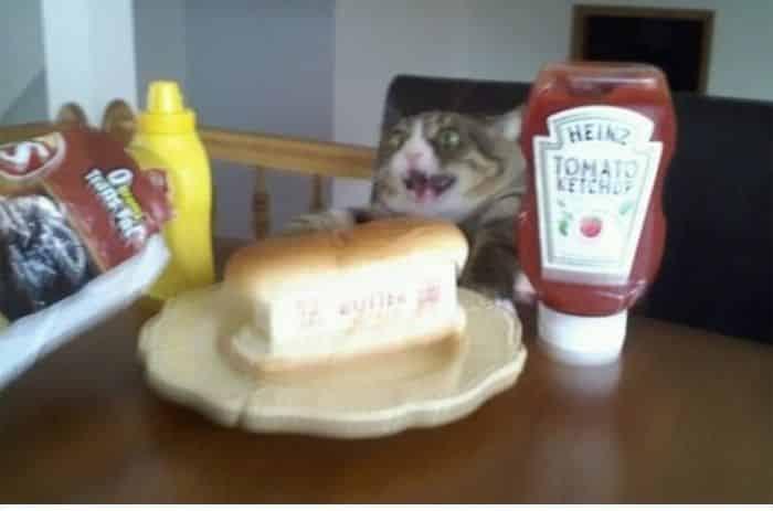 кот собирается поесть