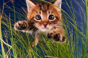 котят из приюта