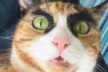 кошка хмурит брови