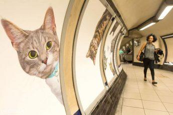 Все объявления в станции метро Лондона были заменены
