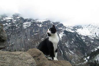 Кот спасает потерявшихся путников путников
