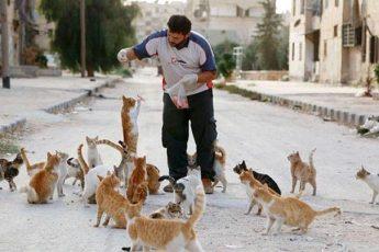 кошки голодные
