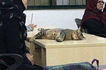 кот заснул на лекции