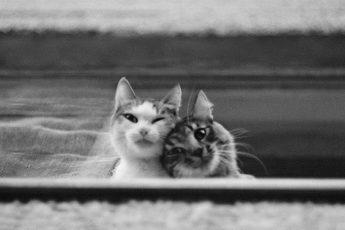 Бездомные кошки из проекта «Среди миров» Евгении Гор
