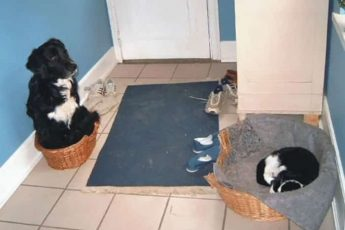кошка реквизировала имущество собак