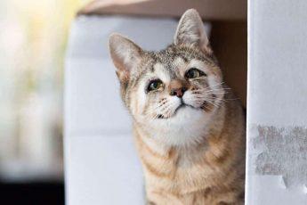 котята родились без глазных век